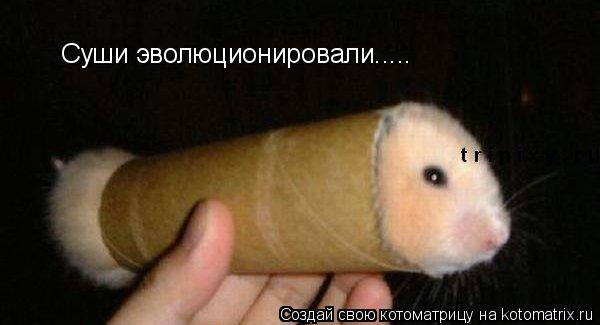 Котоматрица: Суши эволюционировали.....