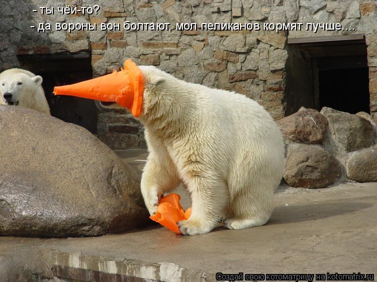 Котоматрица: - ты чёй-то? - да вороны вон болтают, мол пеликанов кормят лучше....