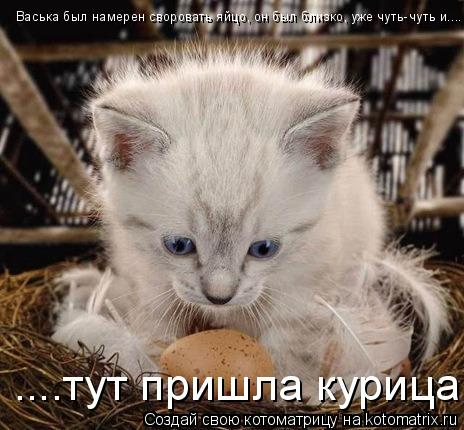 Котоматрица: Васька был намерен своровать яйцо, он был близко, уже чуть-чуть и.... ....тут пришла курица!