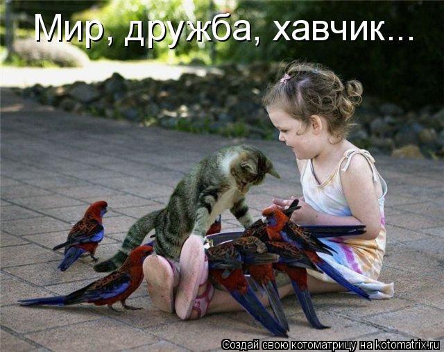 Котоматрица: Мир, дружба, хавчик...