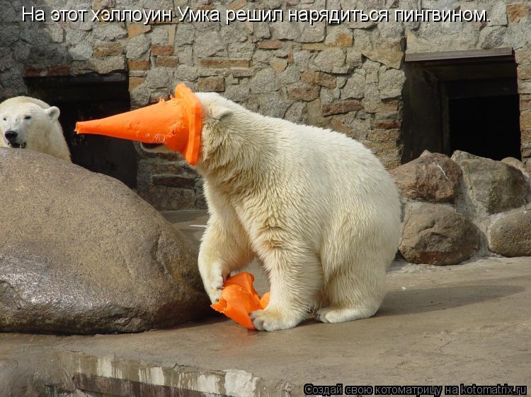 Котоматрица: На этот хэллоуин Умка решил нарядиться пингвином.