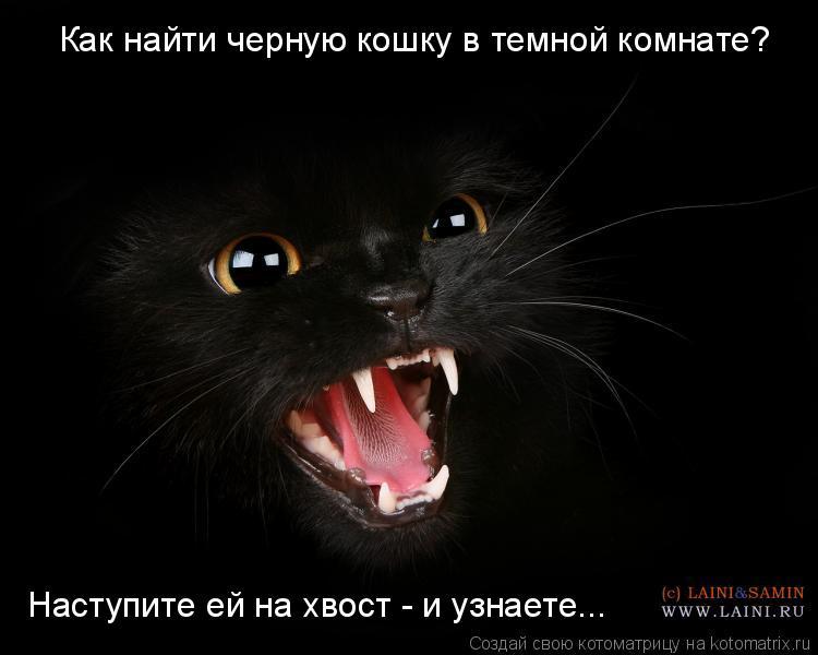 Котоматрица: Как найти черную кошку в темной комнате? Наступите ей на хвост - и узнаете...
