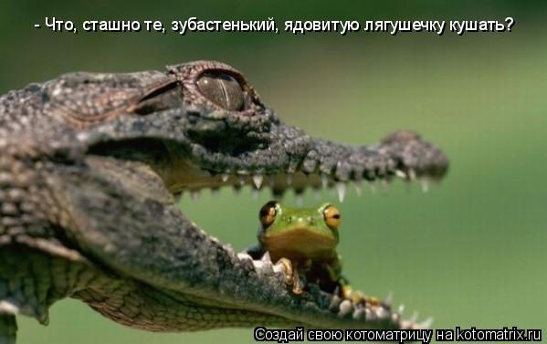 Котоматрица: - Что, сташно те, зубастенький, ядовитую лягушечку кушать?