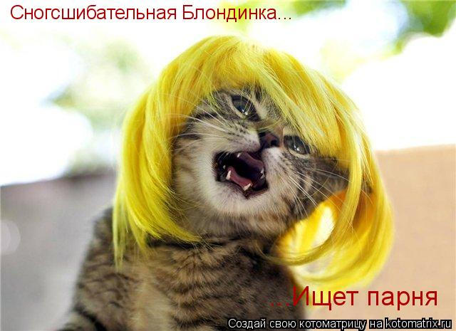 Котоматрица: Сногсшибательная Блондинка... ...Ищет парня