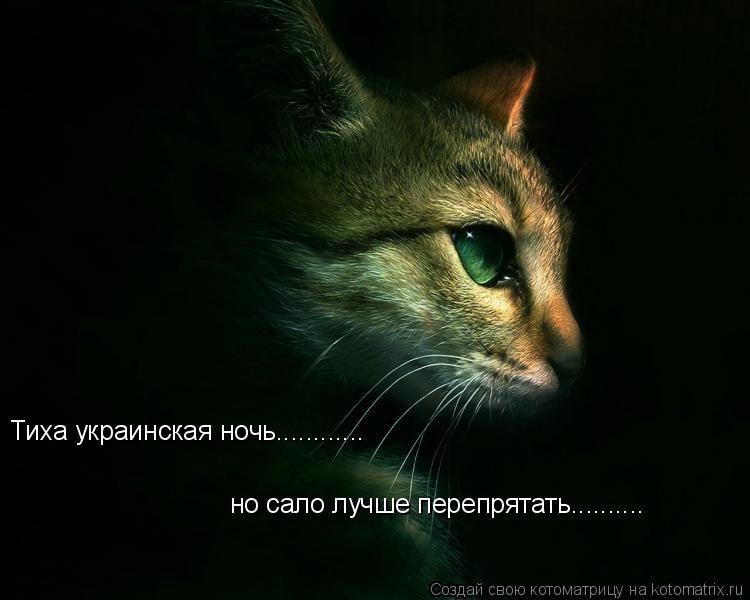 Котоматрица: Тиха украинская ночь............ но сало лучше перепрятать..........