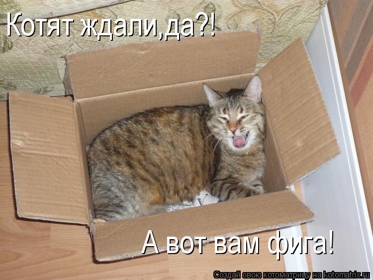 Котоматрица: Котят ждали,да?! А вот вам фига!