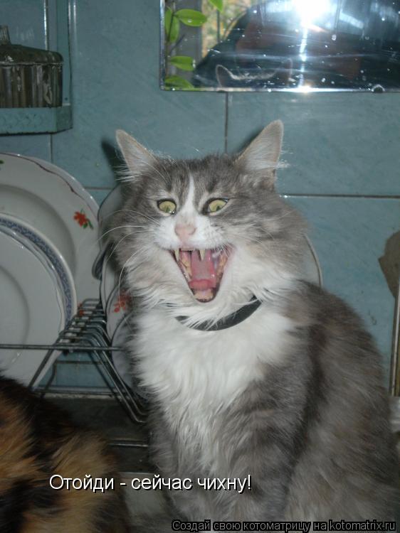 Котоматрица: Отойди - сейчас чихну!