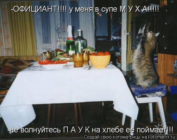 Котоматрица: -ОФИЦИАНТ!!!! у меня в супе М У Х А!!!!! -не волнуйтесь П А У К на хлебе её поймает!!!