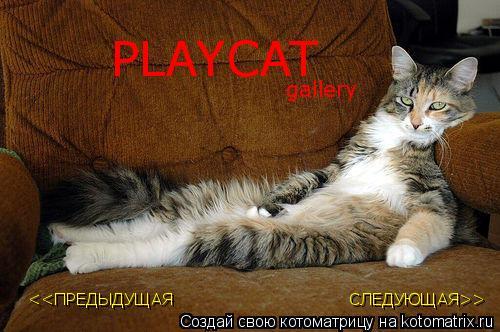 Котоматрица: PLAYCAT <<ПРЕДЫДУЩАЯ СЛЕДУЮЩАЯ>> gallery