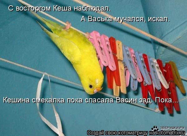 Котоматрица: С восторгом Кеша наблюдал. А Васька мучался, искал. Кешина смекалка пока спасала Васин зад. Пока...