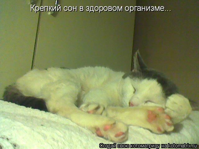 Котоматрица: Крепкий сон в здоровом организме...