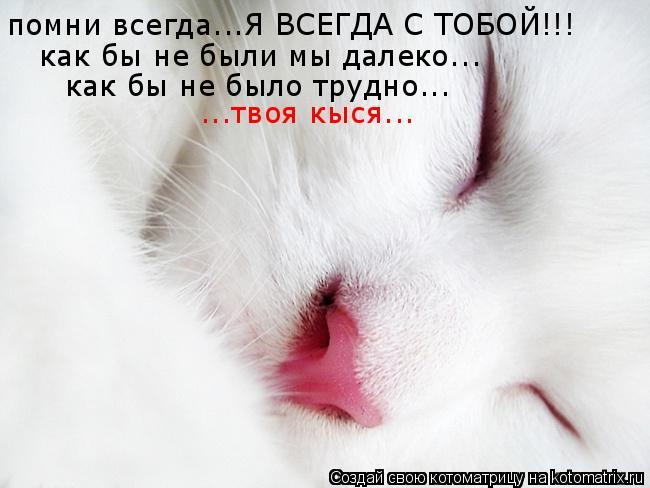 Котоматрица: помни всегда...Я ВСЕГДА С ТОБОЙ!!! как бы не были мы далеко... как бы не было трудно... ...твоя кыся...