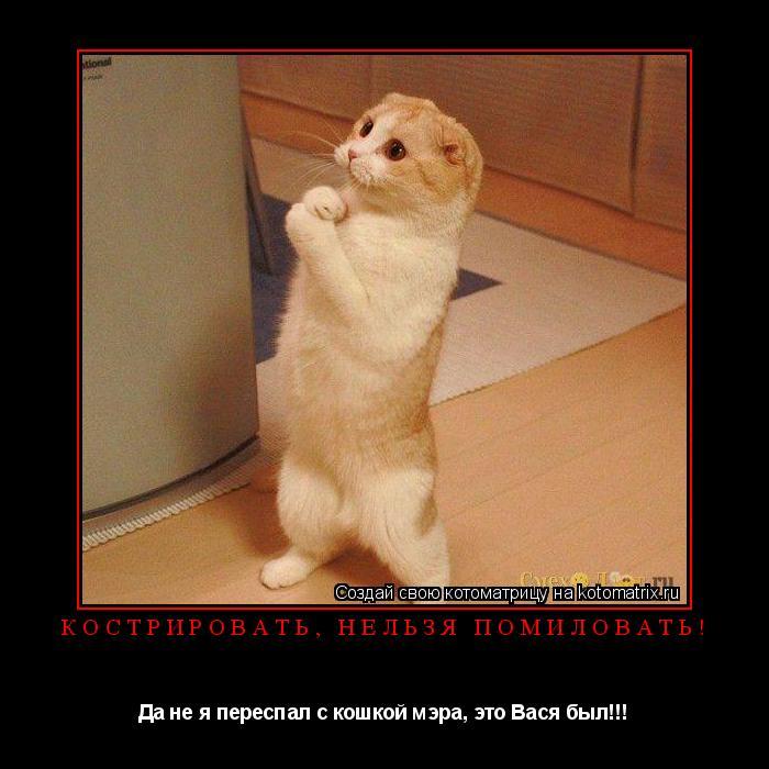 Котоматрица: Кострировать, нельзя помиловать! Да не я переспал с кошкой мэра, это Вася был!!!