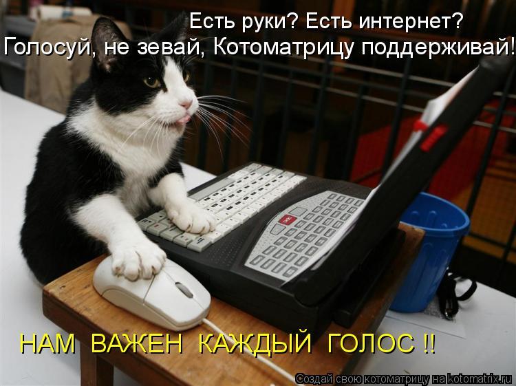 Котоматрица: Есть руки? Есть интернет?  Голосуй, не зевай, Котоматрицу поддерживай! НАМ  ВАЖЕН  КАЖДЫЙ  ГОЛОС !!