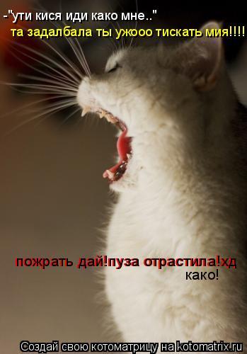 """Котоматрица: -""""ути кися иди како мне.."""" та задалбала ты ужооо тискать мия!!!! пожрать дай!пуза отрастила!хд пожрать дай!пуза отрастила!хд како!"""