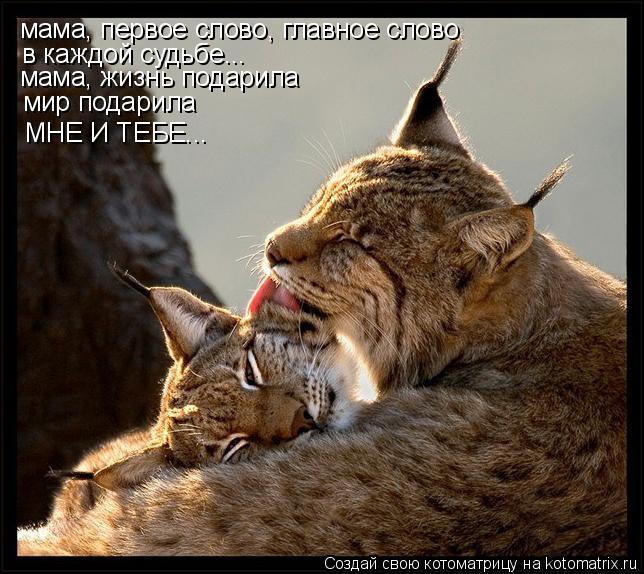 Котоматрица: мама, первое слово, главное слово в каждой судьбе... мама, жизнь подарила мир подарила МНЕ И ТЕБЕ...