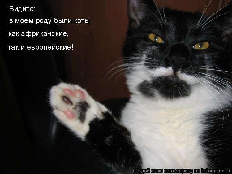 Котоматрица: Видите: в моем роду были коты как африканские, так и европейские!