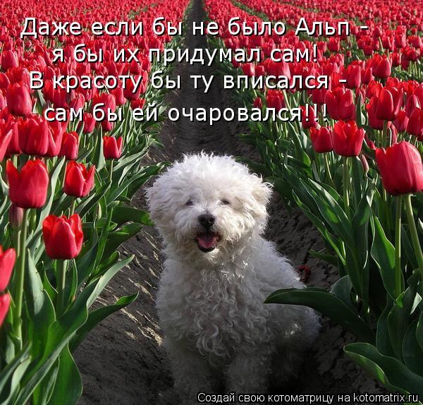 Котоматрица: Даже если бы не было Альп - я бы их придумал сам! В красоту бы ту вписался - сам бы ей очаровался!!!