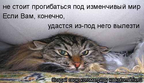 Котоматрица: не стоит прогибаться под изменчивый мир Если Вам, конечно,  удастся из-под него вылезти