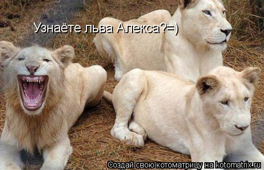 Котоматрица: Узнаёте льва Алекса?=)