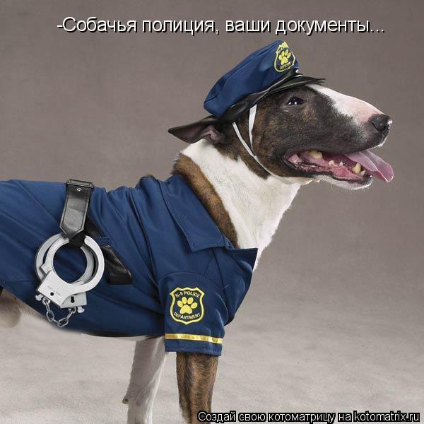 Котоматрица: -Собачья полиция, ваши документы...