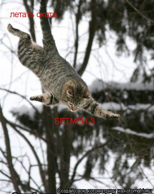 Котоматрица: летать охота БЕТМЕН-3
