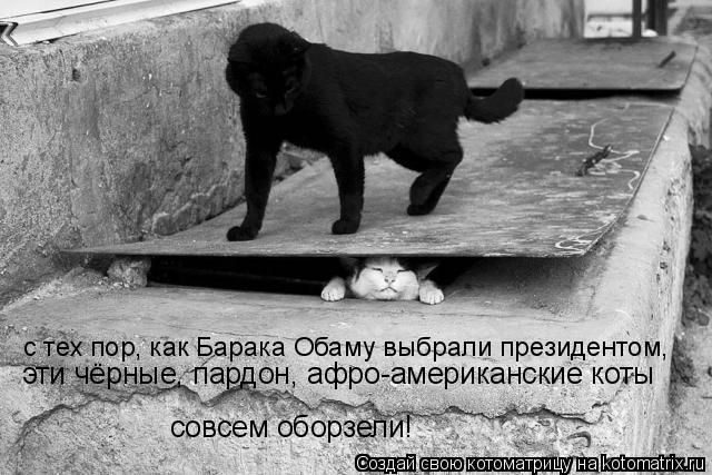 Котоматрица: с тех пор, как Барака Обаму выбрали президентом,  эти чёрные, пардон, афро-американские коты  совсем оборзели!