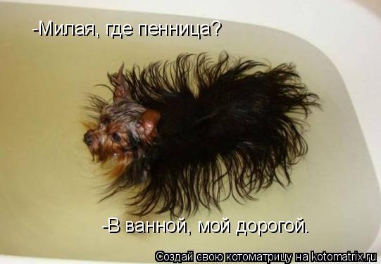 Котоматрица: -Милая, где пенница? -В ванной, мой дорогой.