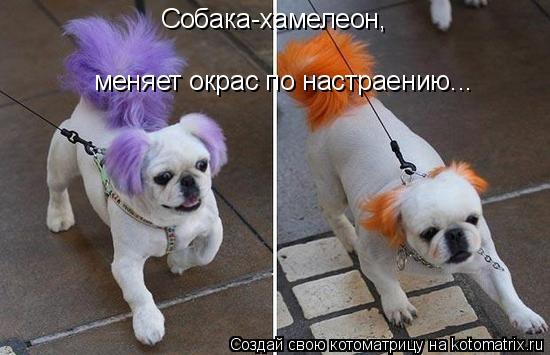 Котоматрица: Собака-хамелеон, меняет окрас по настраению...