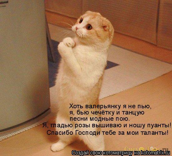 Котоматрица: Хоть валерьянку я не пью, я, бью чечётку и танцую песни модные пою. Я, гладью розы вышиваю и ношу пуанты! Спасибо Господи тебе за мои таланты!