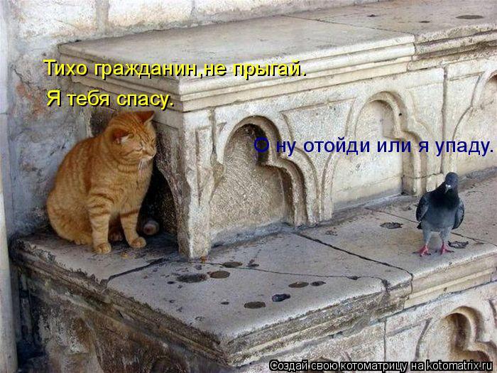 Котоматрица: Тихо гражданин,не прыгай. Я тебя спасу. О ну отойди или я упаду.