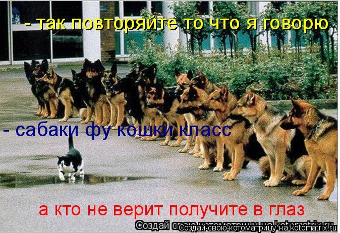 Котоматрица: - так повторяйте то что я говорю - сабаки фу кошки класс а кто не верит получите в глаз