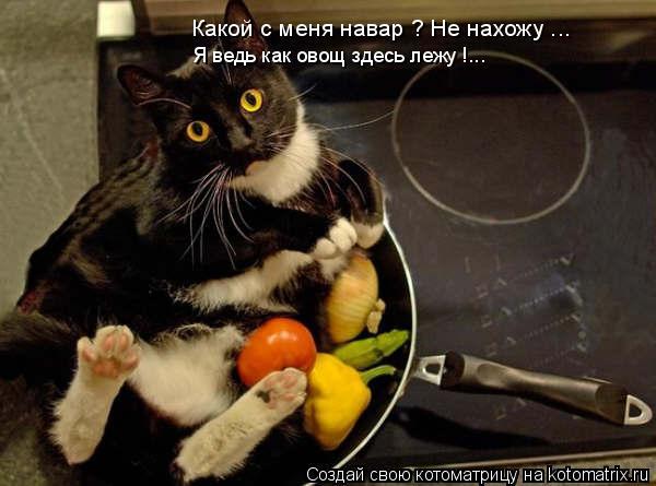 Котоматрица: Какой с меня навар ? Не нахожу ... Я ведь как овощ здесь лежу !...