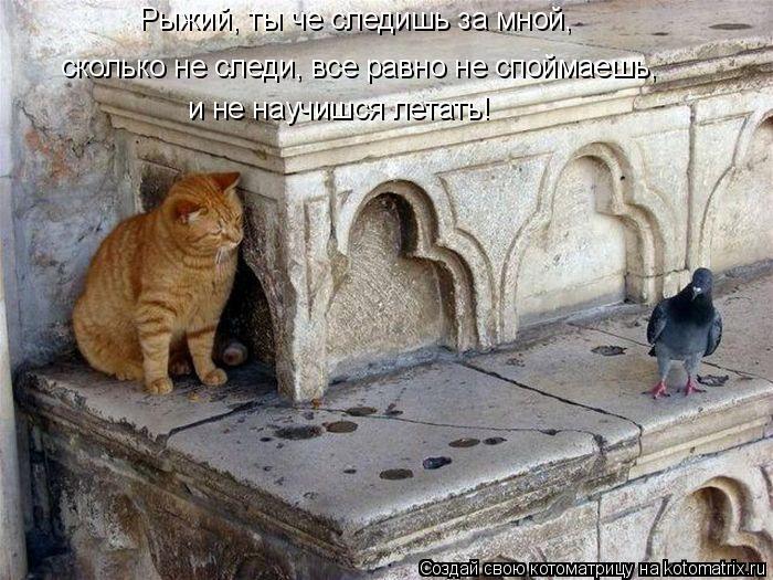 Котоматрица: Рыжий, ты че следишь за мной, сколько не следи, все равно не споймаешь,  и не научишся летать!