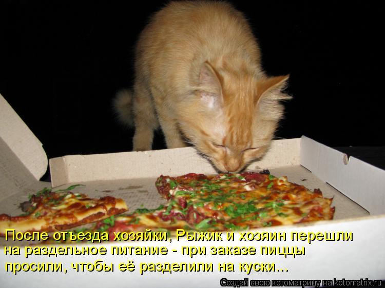 Котоматрица: После отъезда хозяйки, Рыжик и хозяин перешли на раздельное питание - при заказе пиццы просили, чтобы её разделили на куски...