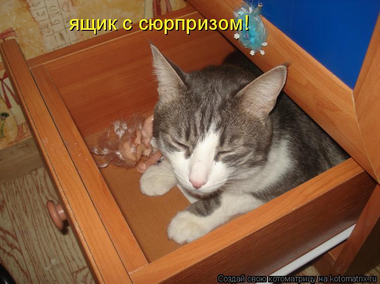 Котоматрица: ящик с сюрпризом!
