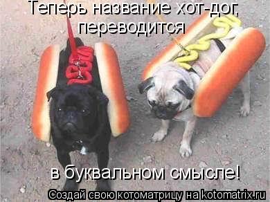 Котоматрица: Теперь название хот-дог,  переводится  в буквальном смысле!