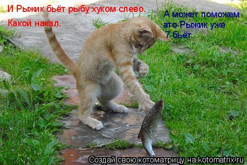 Котоматрица: И Рыжик бьёт рыбу хуком слево. Какой накал. А может поможем ато Рыжик уже 7 бьёт.