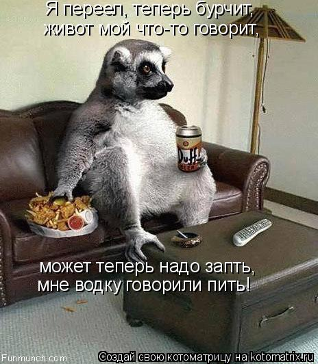 Котоматрица: Я переел, теперь бурчит, живот мой что-то говорит, может теперь надо запть, мне водку говорили пить!