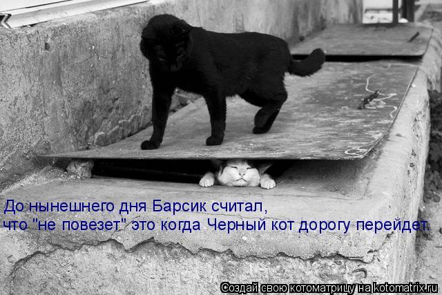 """Котоматрица: До нынешнего дня Барсик считал,  что """"не повезет"""" это когда Черный кот дорогу перейдет."""