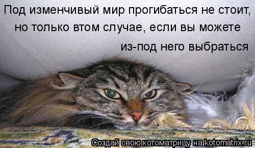 Котоматрица: Под изменчивый мир прогибаться не стоит, но только втом случае, если вы можете из-под него выбраться