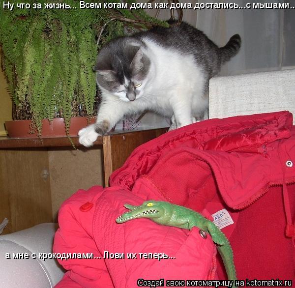 Котоматрица: Ну что за жизнь... Всем котам дома как дома достались...с мышами... а мне с крокодилами... Лови их теперь...