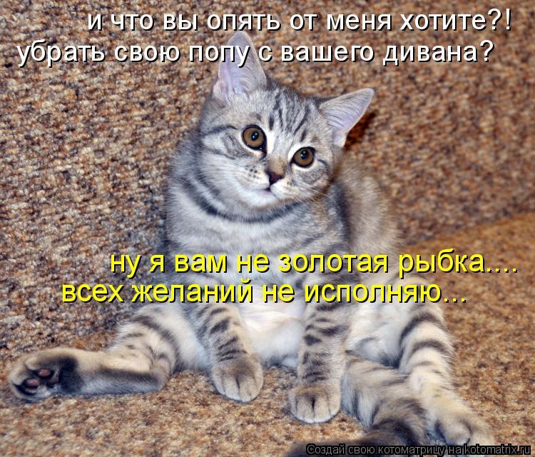 Котоматрица: и что вы опять от меня хотите?! убрать свою попу с вашего дивана? ну я вам не золотая рыбка....  всех желаний не исполняю...
