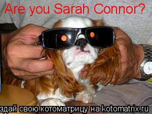 Котоматрица: Are you Sarah Connor?