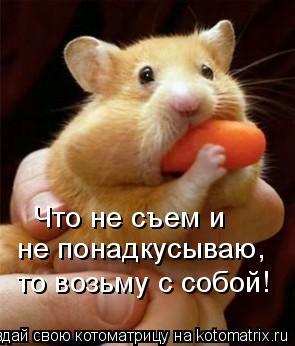 Котоматрица: Что не съем и  не понадкусываю, то возьму с собой!