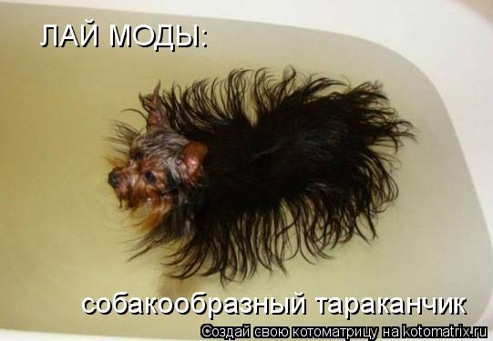 Котоматрица: ЛАЙ МОДЫ: собакообразный тараканчик