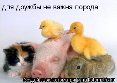 Котоматрица: для дружбы не важна порода...