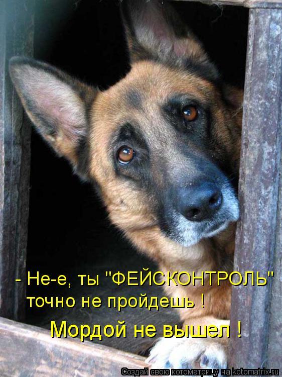"""Котоматрица: - Не-е, ты """"ФЕЙСКОНТРОЛЬ""""  точно не пройдешь ! Мордой не вышел !"""