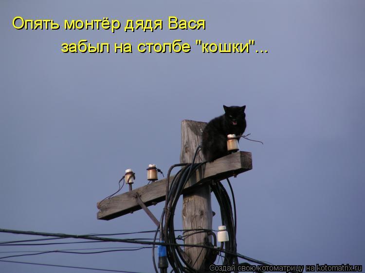 "Котоматрица: Опять монтёр дядя Вася  забыл на столбе ""кошки""..."