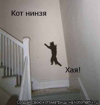 Котоматрица: Кот нинзя Хая!